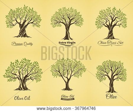 Olive Trees Silhouette With Green Leaves On Branches, Isolated Vector Icons Set. Olive Oil Extractio