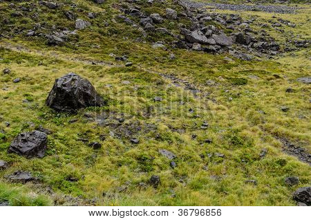Field Of Grass And Black Rocks, Typical To The South Island Of New Zealand