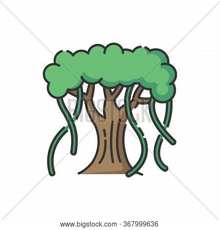 Indian Banyan Rgb Color Icon. National Indian Evergreen Tree With Wide Crown. Symbol Of Eternal Life
