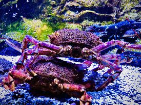 Crabs On The Bottom Of The Ocean Underwater Vivid Color