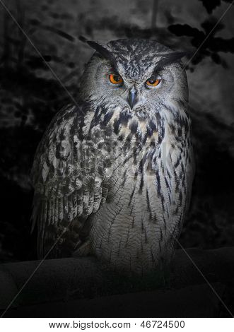 The evil eyes in the night. ( Eagle Owl, Bubo bubo). Halloween theme.