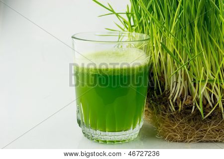 Green Organic Wheat Grass Juice ready to drink