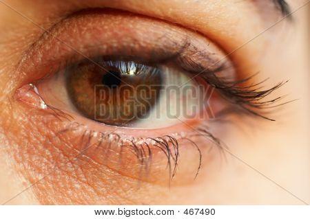 Sharp And Detail Macro Of Eye
