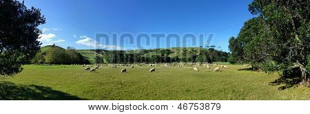 Sheep grazing in front of a panoramic hill
