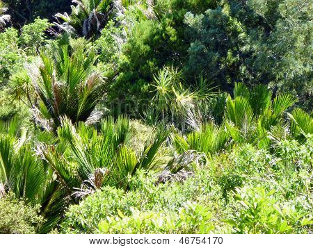 Native bushland