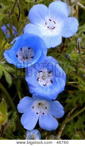Blue Flower Family