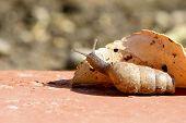 curious slug peering around a leaf. poster