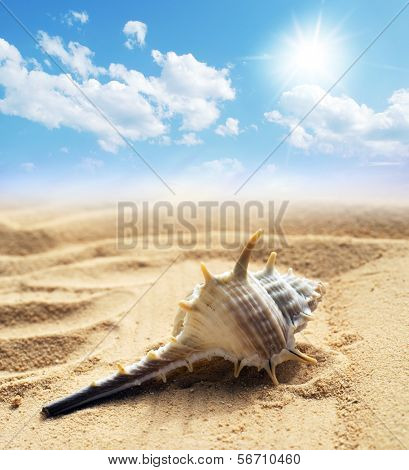 seashell under  blue sky background
