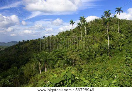 Escambray mountains in Cuba Island