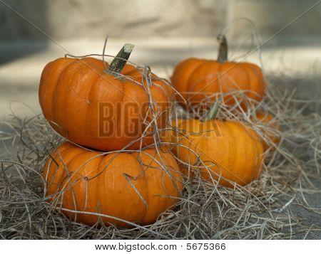 Small Sugar Pumpkins And Old Straw.