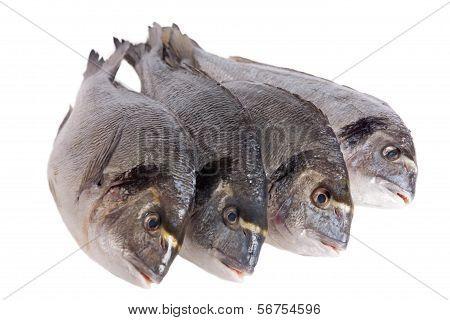 Four Dorado Fish Isolated On White
