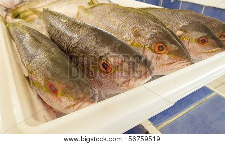 Cleaned Yellowtail Fish