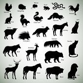 Set of animal silhouettes on abstract background poster
