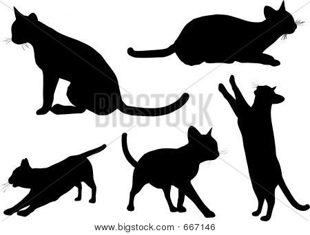poster of Various cat silhouettes