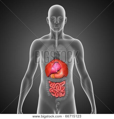 Small intestine with DLPS black bg