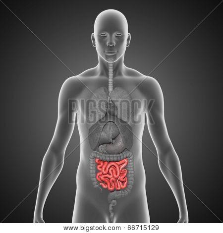 Small intestine black bg