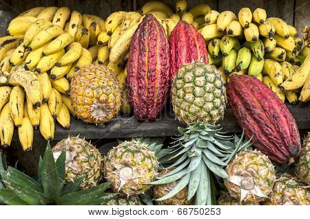 Cocoa Surrounded By Other Tropical Fruits