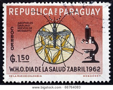 Postage Stamp Paraguay 1962 Microscope, Mosquito And Eggs