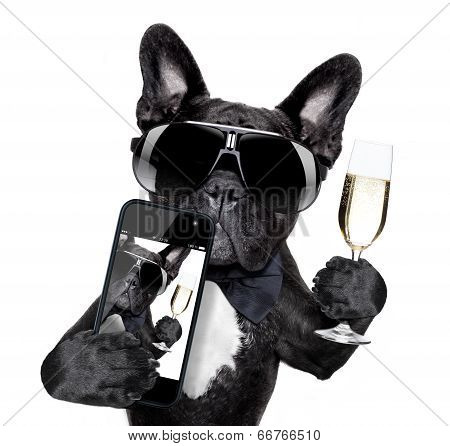 French Bulldog Selfie