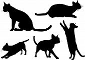 Various cat silhouettes poster