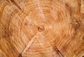 chopped down tree stump texture close up poster