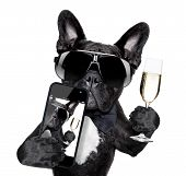 selfie of dog toasting for you in a cool pose poster