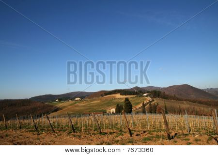 Tuscany Vineyard and  Landscape