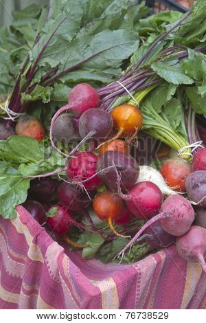 Fresh Picked Bunch Of Organic Beets