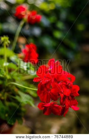 Close-up Of A Beautiful Red Flower