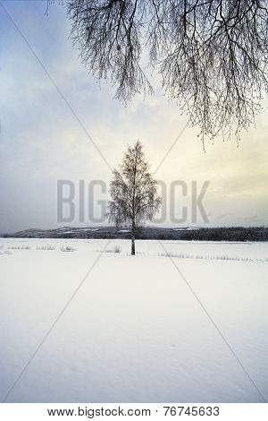 Lone Tree In A Snow Covered Landscape