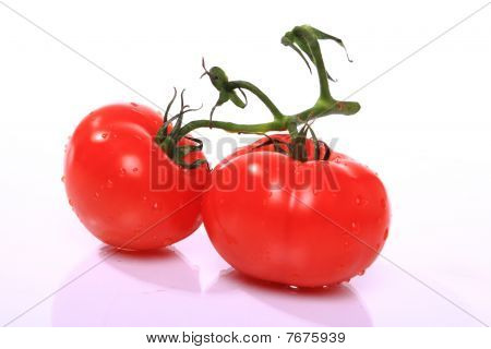 Two red fresh tomatoes with water drops on white isolated background