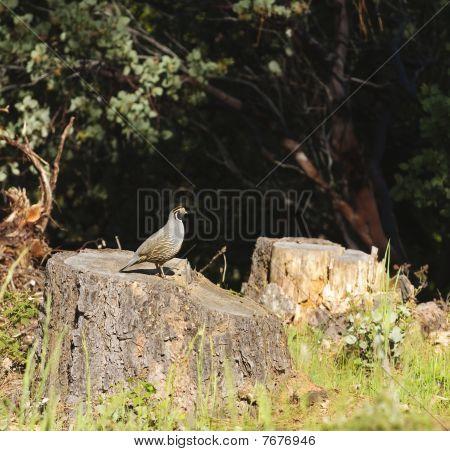 Wildlife In Northern California