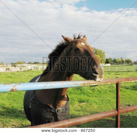 horse biting rail