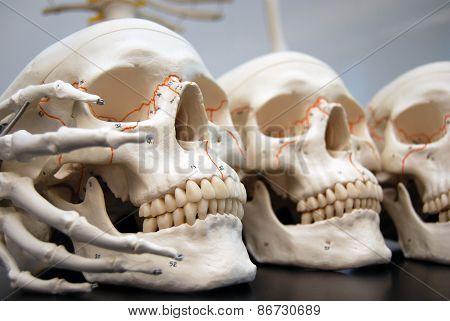 Boney Fingers Holding Skulls