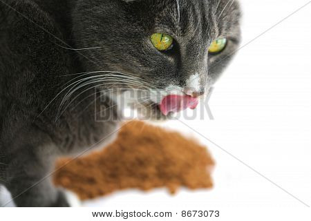 Hungry Yellow Eyed Cat
