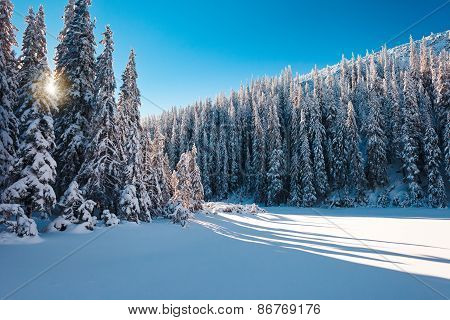 Sunny snowy forest landscape
