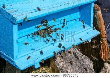 Honey Bees Near A Beehive, In Flight