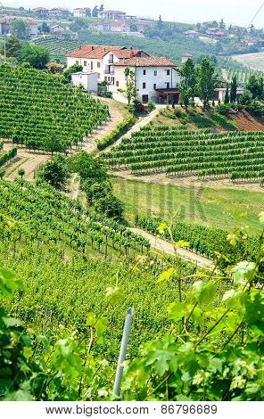 Vineyards and wineries in Piemont near the village of Barolo Italy poster