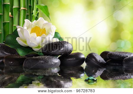 Water Lily On Lots Of Black Stones Reflected In Water