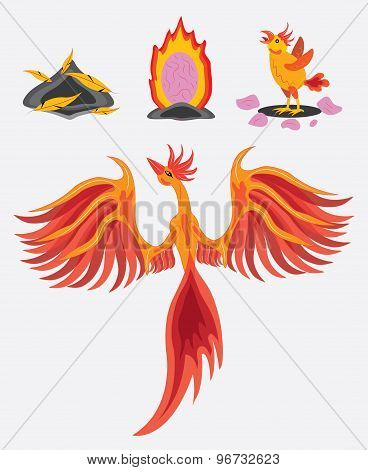 Bird phoenix and all types of her regeneration. poster