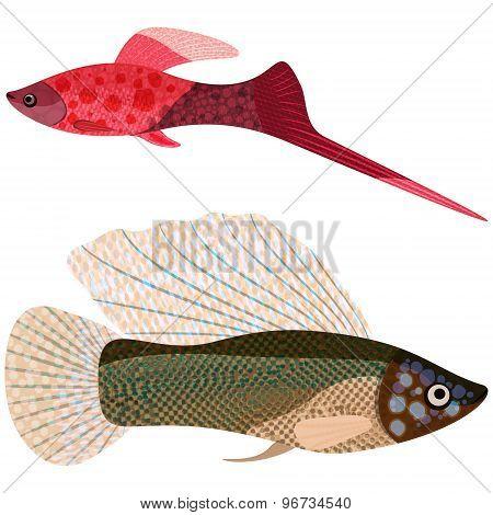 Fishes Aquarium.