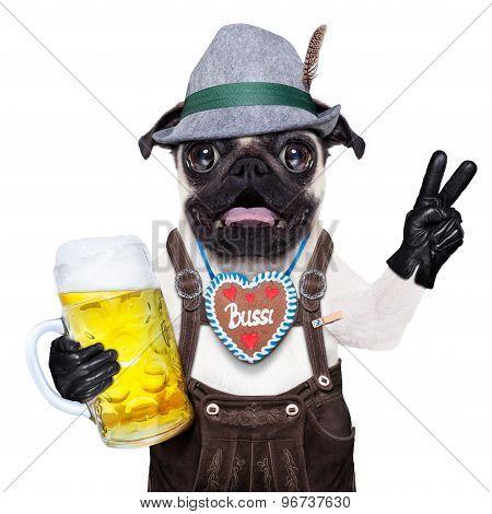 Surprised Crazy Bavarian Dog