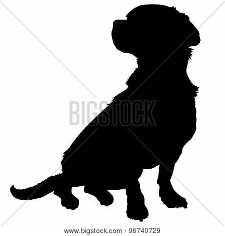 Mixed Breed Silhouette