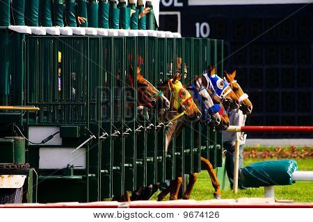 Race horses breaking from starting gate