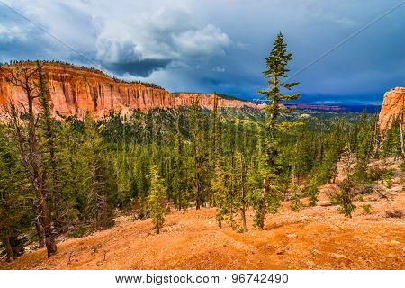 Ponderosa Pines Bryce Canyon National