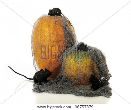 Two pumpkins covered in a tattered old mesh overrun with 3 black mice and a big black rat.  On a white background.
