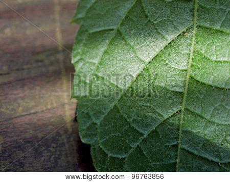Green Leaf on Wood