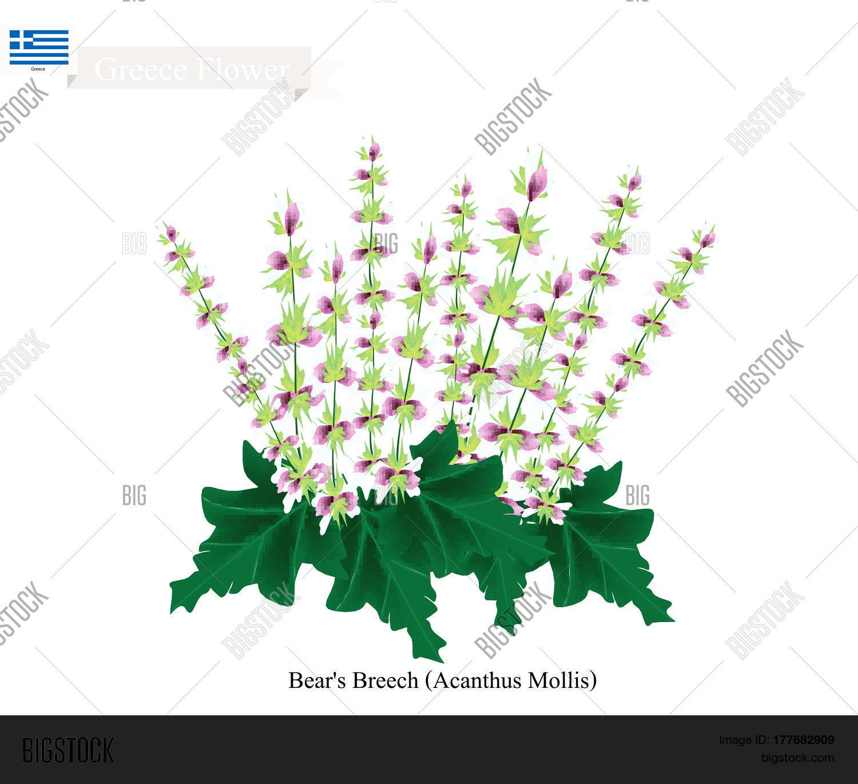 Greece Flower Vector Photo Free Trial Bigstock