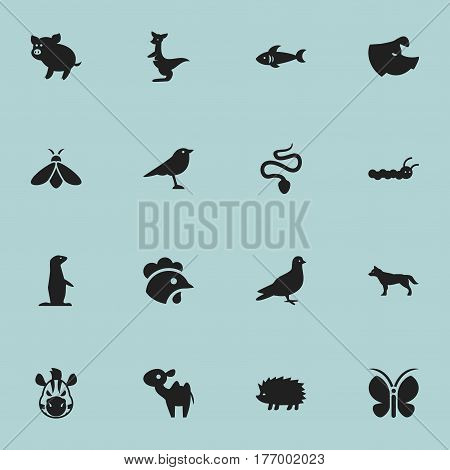 Set Of 16 Editable Zoology Icons. Includes Symbols Such As Pigeon, Serpent, Rooster And More. Can Be Used For Web, Mobile, UI And Infographic Design.