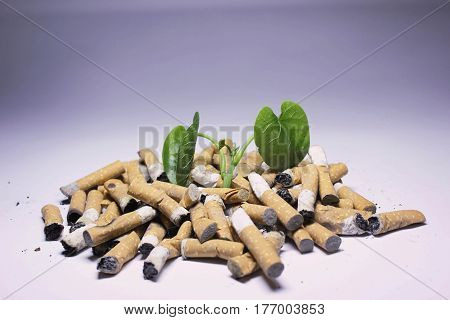 No Smoking; Cigarette and newborn green plant isolated on white